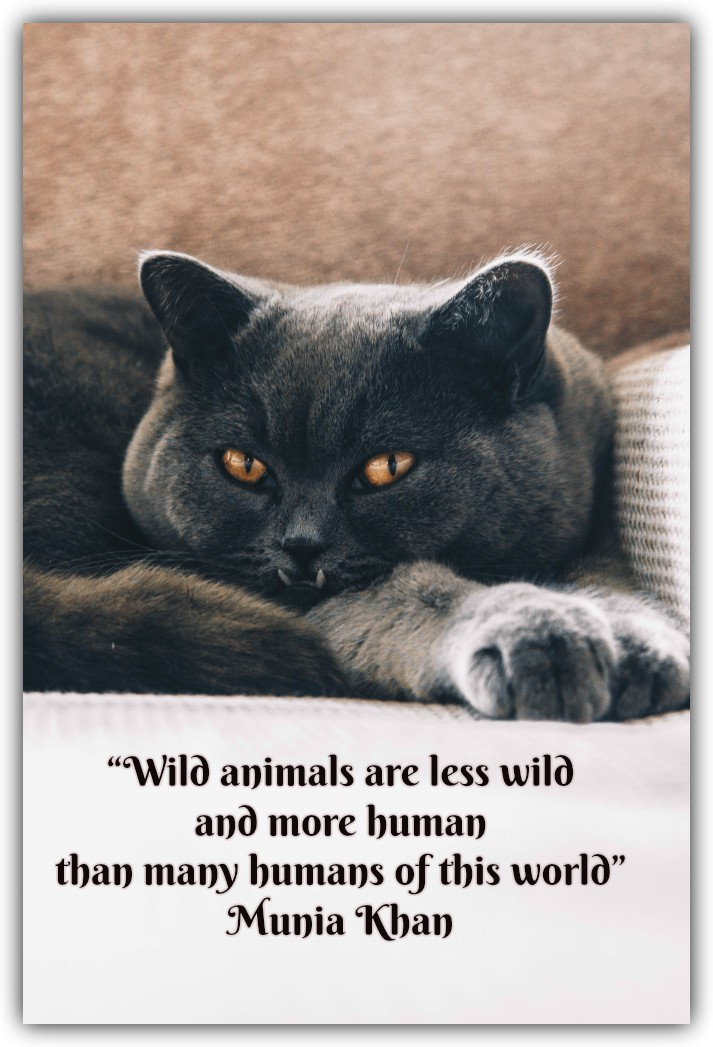 """""""Wild animals are less wild and more human than many humans of this world""""Munia Khan"""